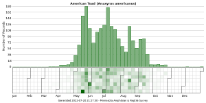 Phenology of American Toad (Anaxyrus americanus)