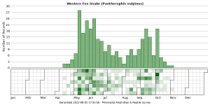 Phenology of Western Fox Snake (Pantherophis vulpinus)
